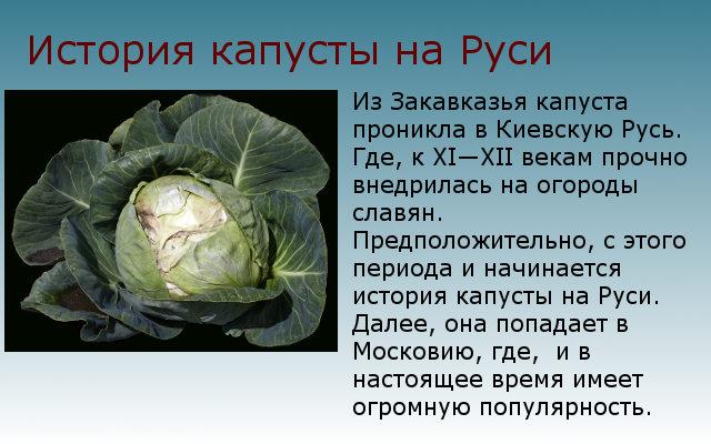история капусты на руси