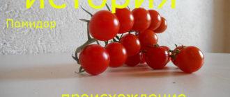 история томатов