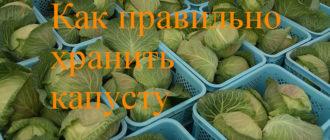 хранить капусту