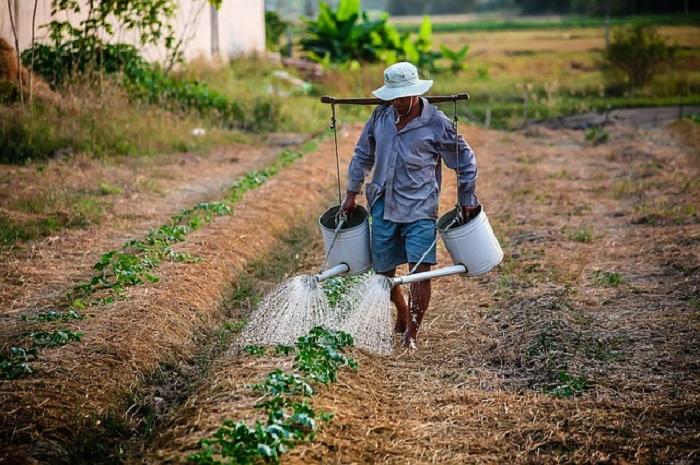 выращивание капусты полив