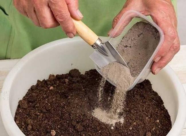 подготовка грунта для краснокочанной