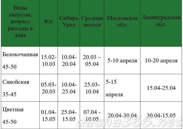 сроки цветной капусты