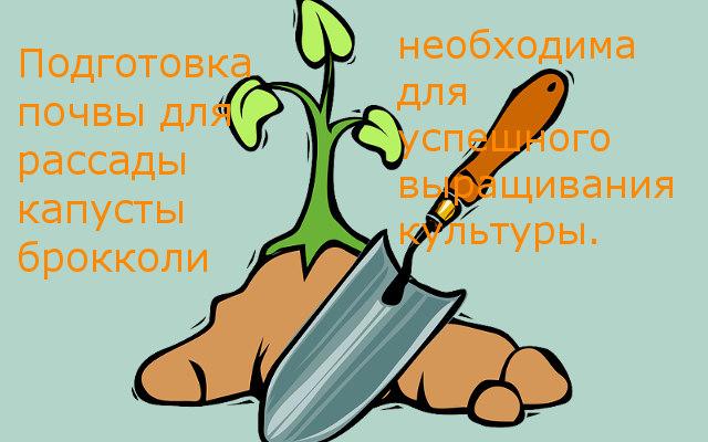 подготовка почвы для брокколи