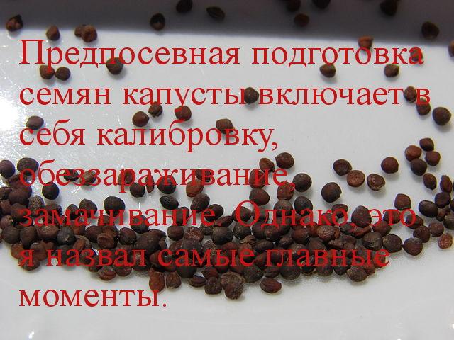 подготовка семян кольраби