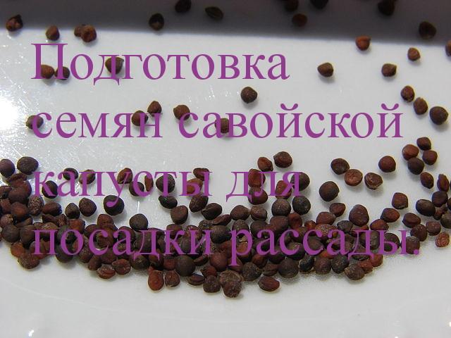 подготовка семян савойской капусты