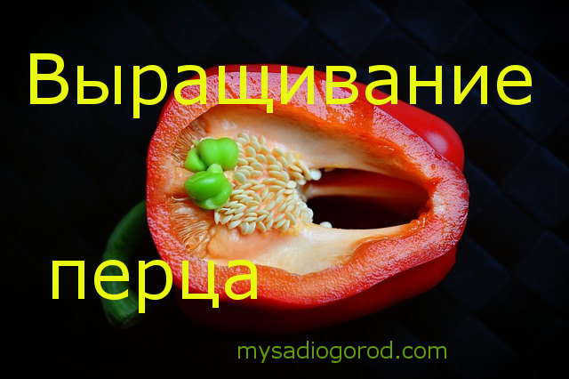 выращивание и перца
