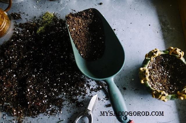 подготовка грунта для рассады огурцов