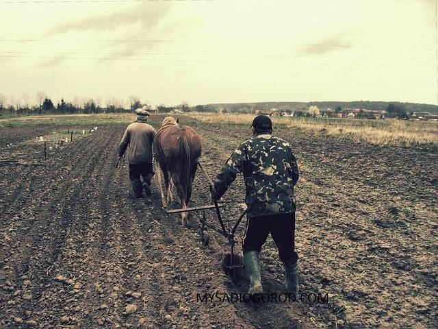 подготовка почвы выращивание моркови