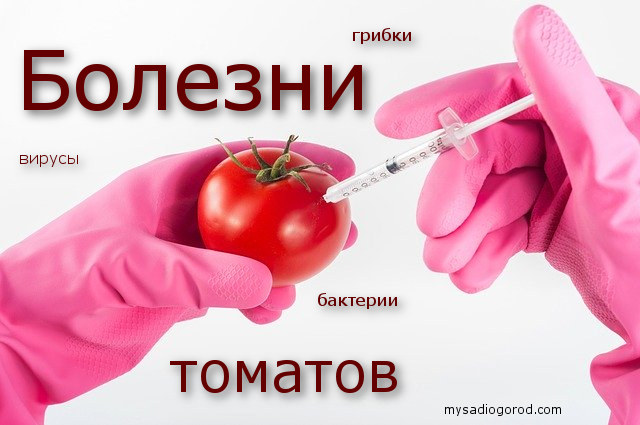 болезни и томатов