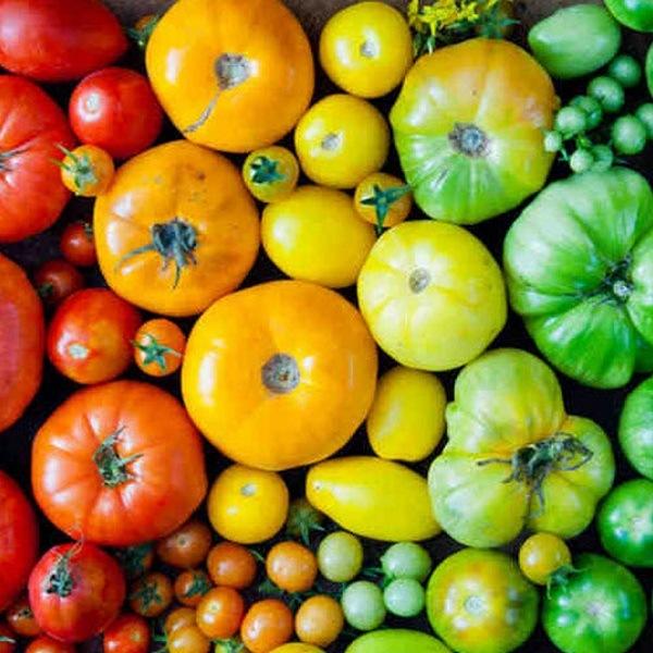 зеленые томаты хранение