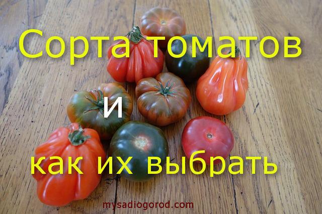Виды семян помидоров
