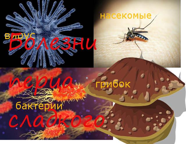болезни и перцев