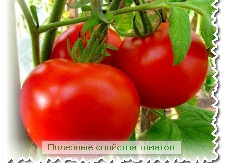полезные свойства томатов