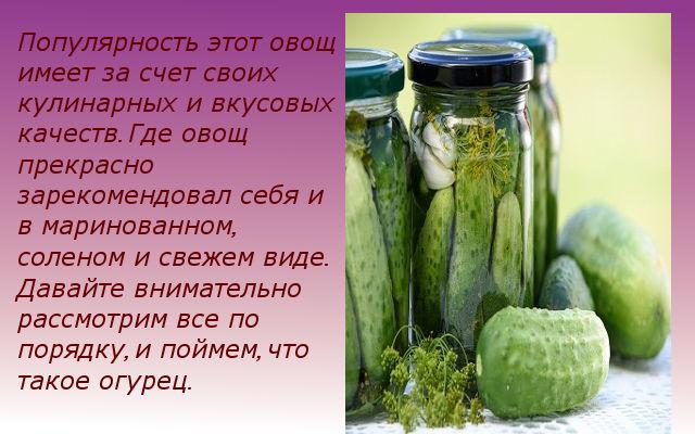 полезные свойства огурцов