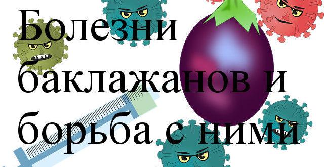 болезни и баклажанов