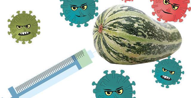 болезни и кабачков