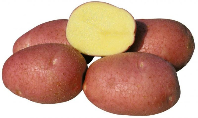 Беллароза сорта картофеля