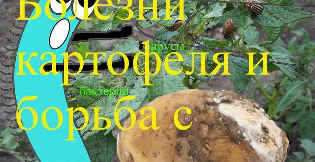 болезни и картофеля