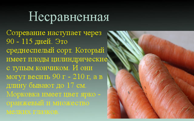 несравненная морковь