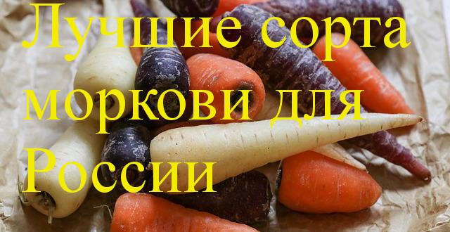 сорта и моркови