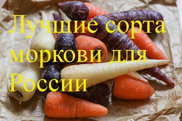 Сорта моркови для посадки весной