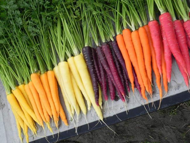 цвета моркови