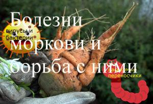 болезни и моркови