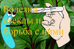 болезни и свеклы