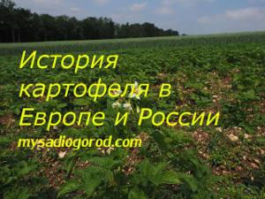 история и картофеля