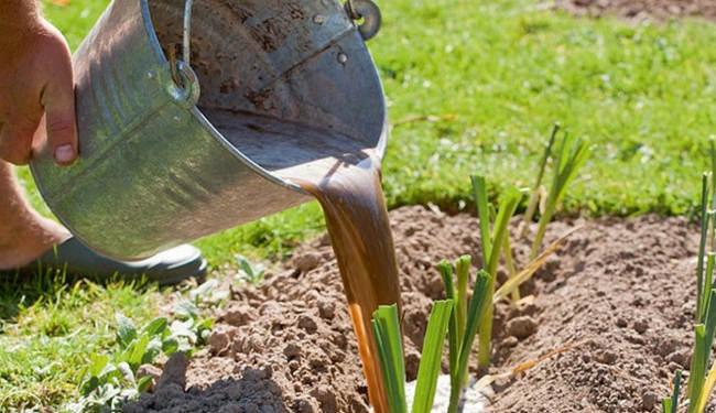 уход за преем на огороде выращивание