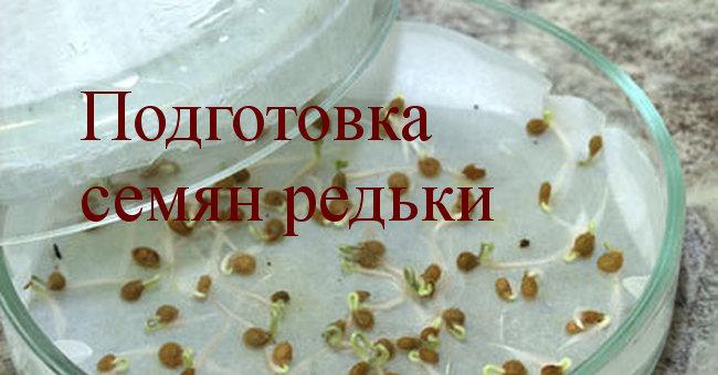 подготовка семян редьки