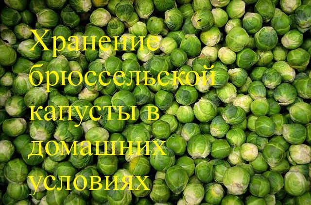 хранение брюссельской капусты