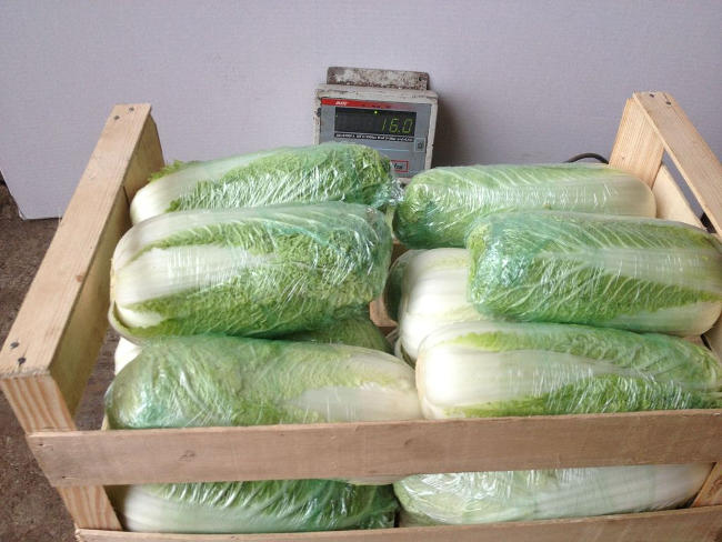 способы хранения пекинскую капусту