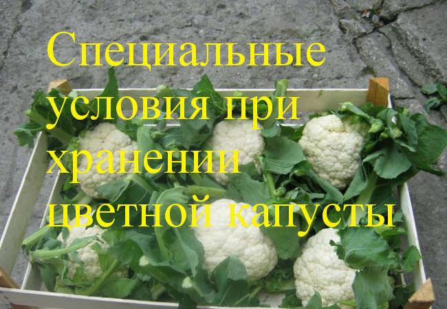 условия для цветной капусты