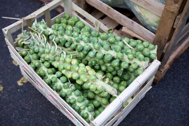 условия хранения брюссельской капусты