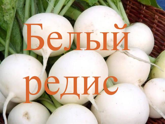 белый редис сорта