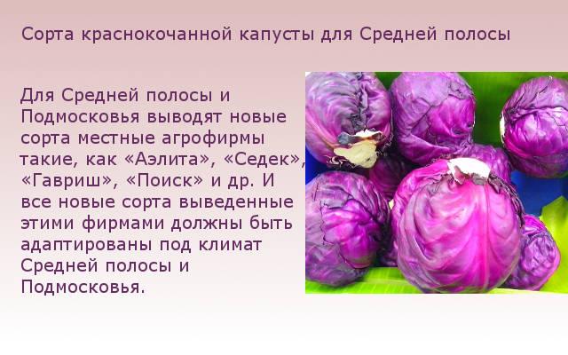 Сорта краснокочанной капусты для Средней полосы