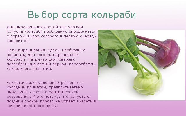 Выбор сортов кольраби