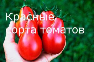Красные сорта томатов