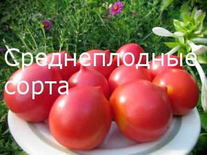 Среднеплодные сорта