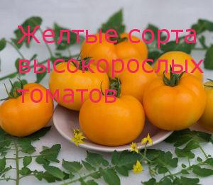 Желтые сорта высокорослых томатов