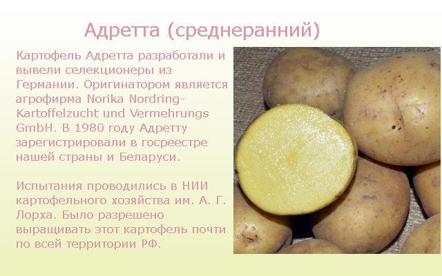 Адретта ранние сорта картофеля