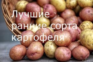 Назначение картофеля