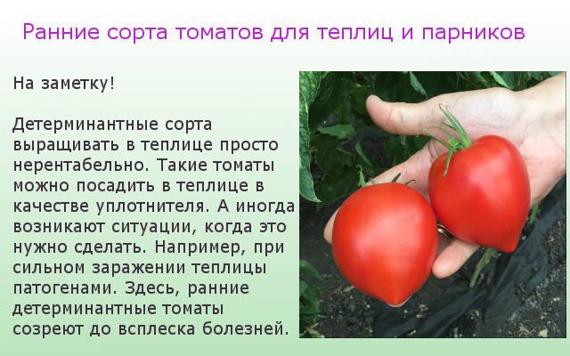 томаты для теплиц и парников