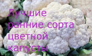 ранние сорта цветной капусты