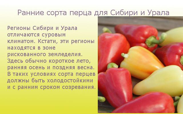 Ранние сорта перца для Сибири и Урала
