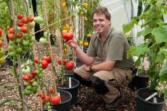 салатные сорта томатов