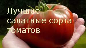 Лучшие салатные сорта томатов