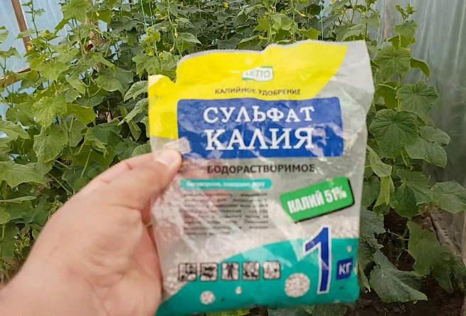 Подкормка огурцов калием