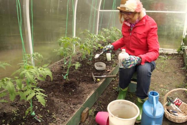 Подкормка томатов схема